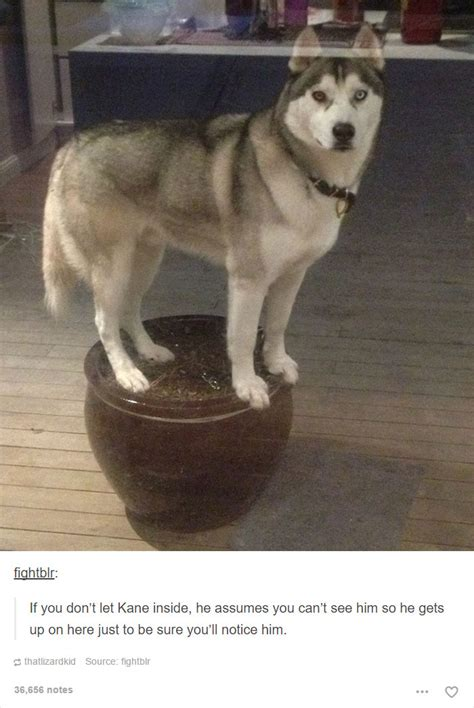 15+ Dog Posts On Tumblr That Are Impossible To Get Through