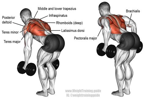 Bent over two arm dumbbell row