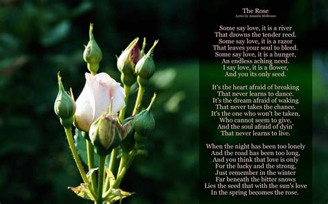 The Rose Lyrics | Lyrics, The rose song, Songs with meaning