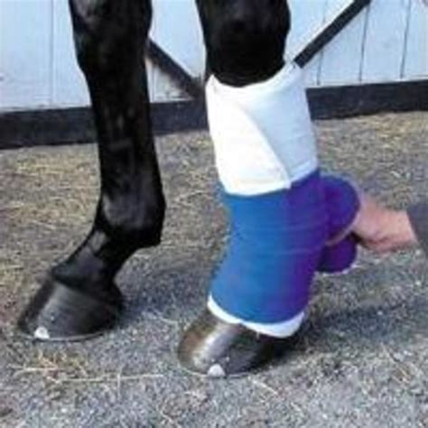 Too Young for Leg Wraps? - Expert advice on horse care and