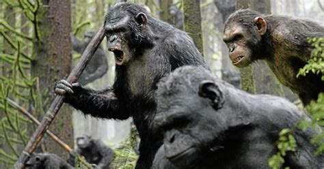 Modern humans spared from some cancers as primates evolved