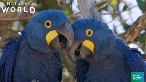 Parrots GIFs - Find & Share on GIPHY